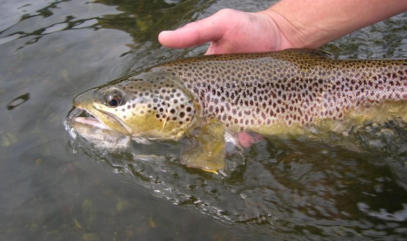 bitterroot-river-fishing-report-17